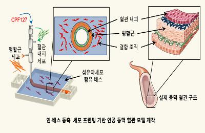 기계 조동우 교수-창의IT 장진아 교수팀, 인공동맥혈관으로 몸 밖에서 동맥경화 본다